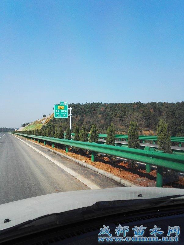 宜昌宜张高速绿化项目(