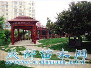天津滨海新区塘沽 绿肺 面积超550万平方米图片